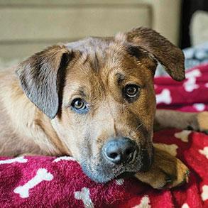 Hallmark Floors Partner Ipittythebull helped this puppy