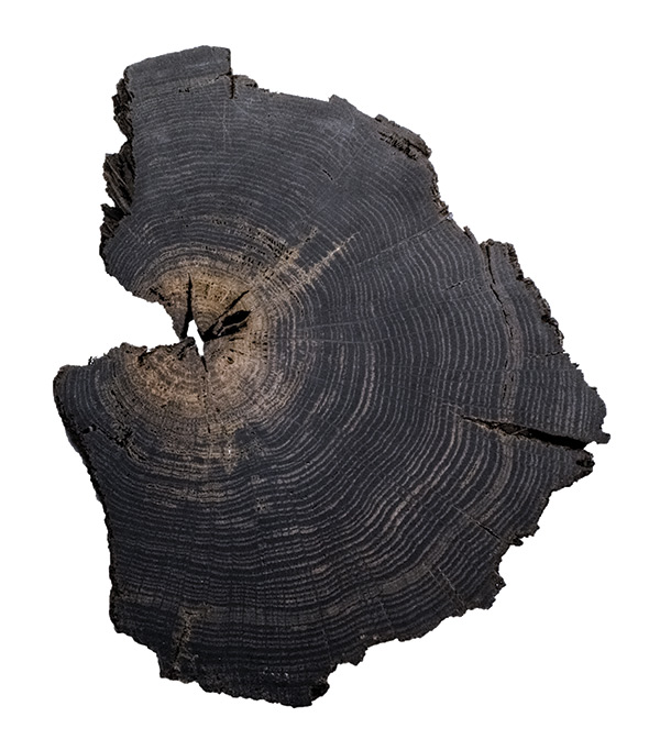 The True Story | This wood is an actual piece of bogwood sample which is 1000 years old. Hallmark Floors has successfully replicated the nature's process to create our new True flooring collections.